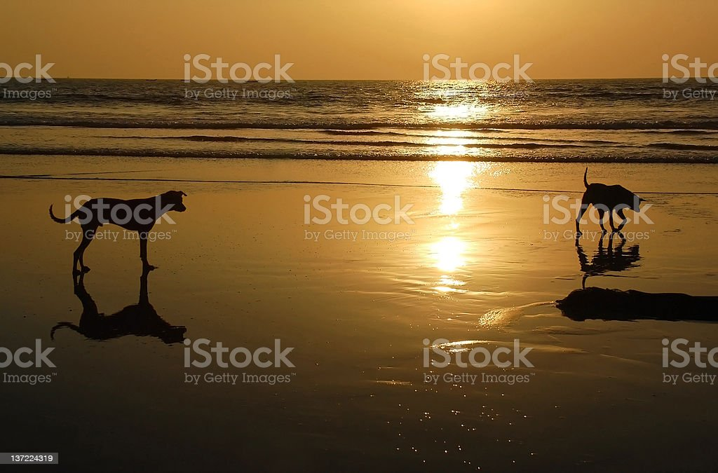 Two Dogs at Sunset stock photo