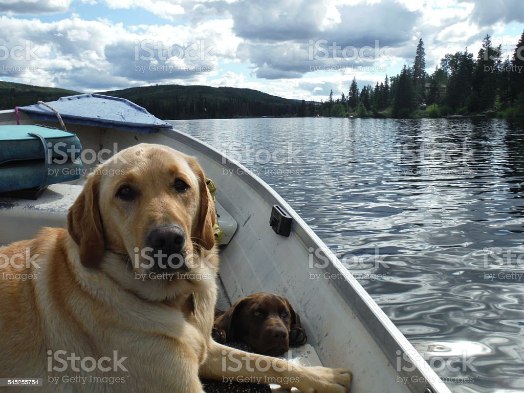 Two Dogs in a Boat stock photo