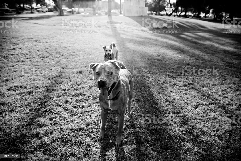 Two Dogs in the Park royalty-free stock photo