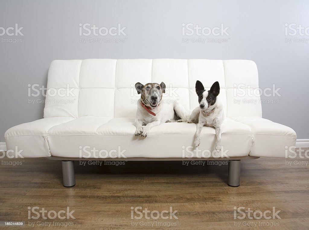 Two Dogs On A Lounge stock photo
