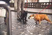 Two Dogs on Leash Greeting each other on Urban Sidewalk