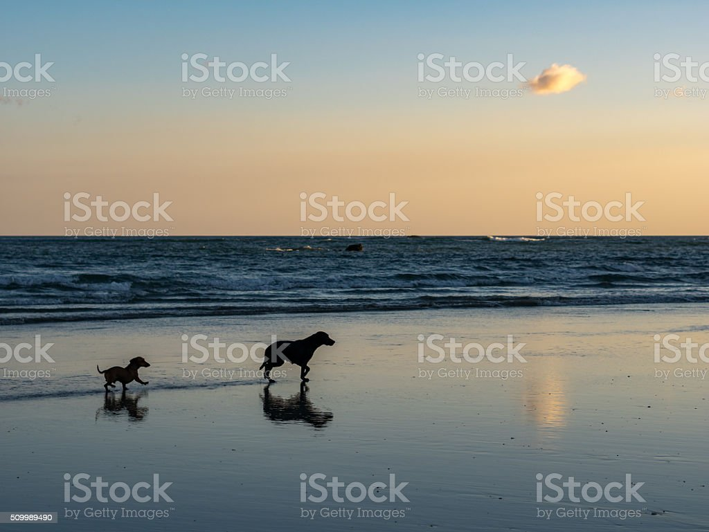 Two dogs on the beach royalty-free stock photo