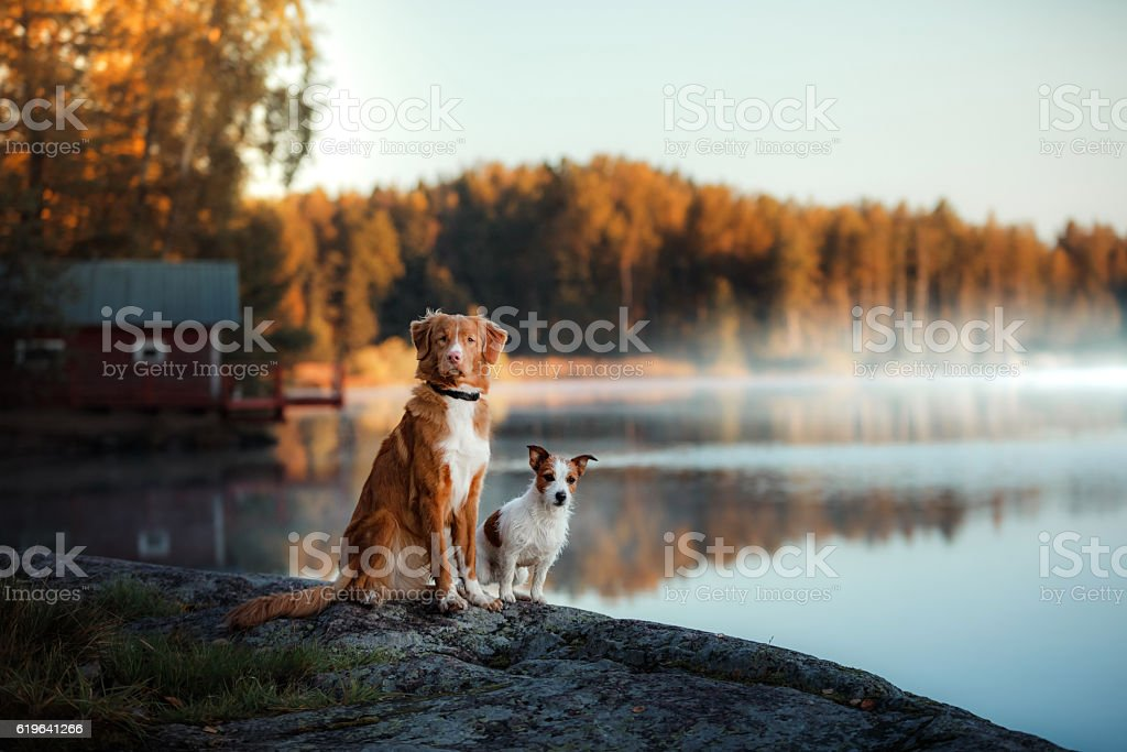 Two dogs on the river bank stock photo