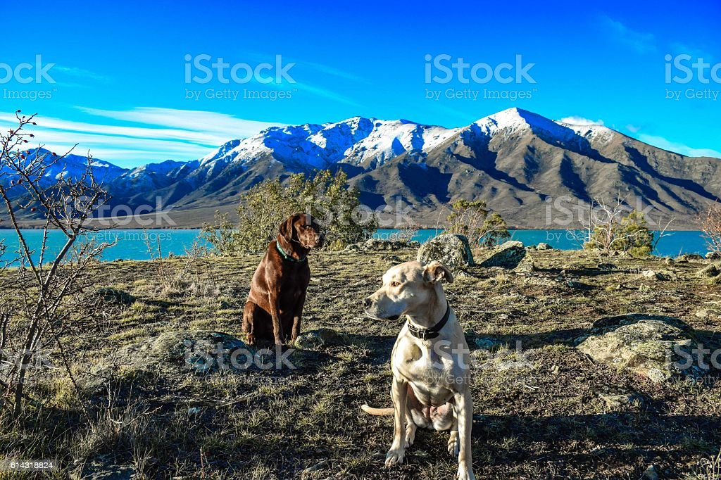 Two dogs taking a break on the mountain royalty-free stock photo