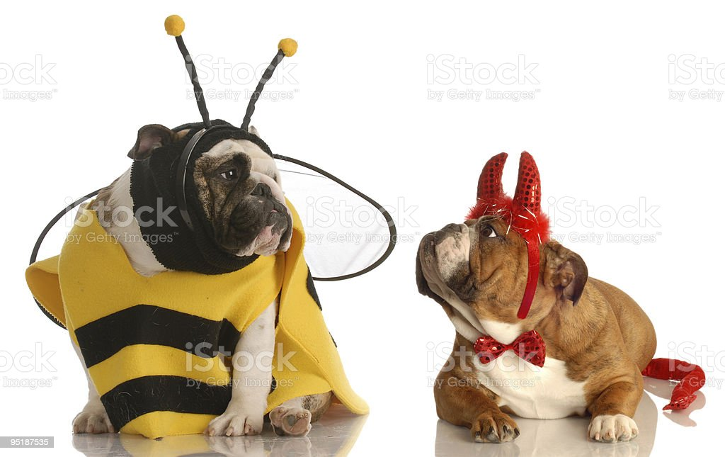 two dogs wearing halloween costumes stock photo