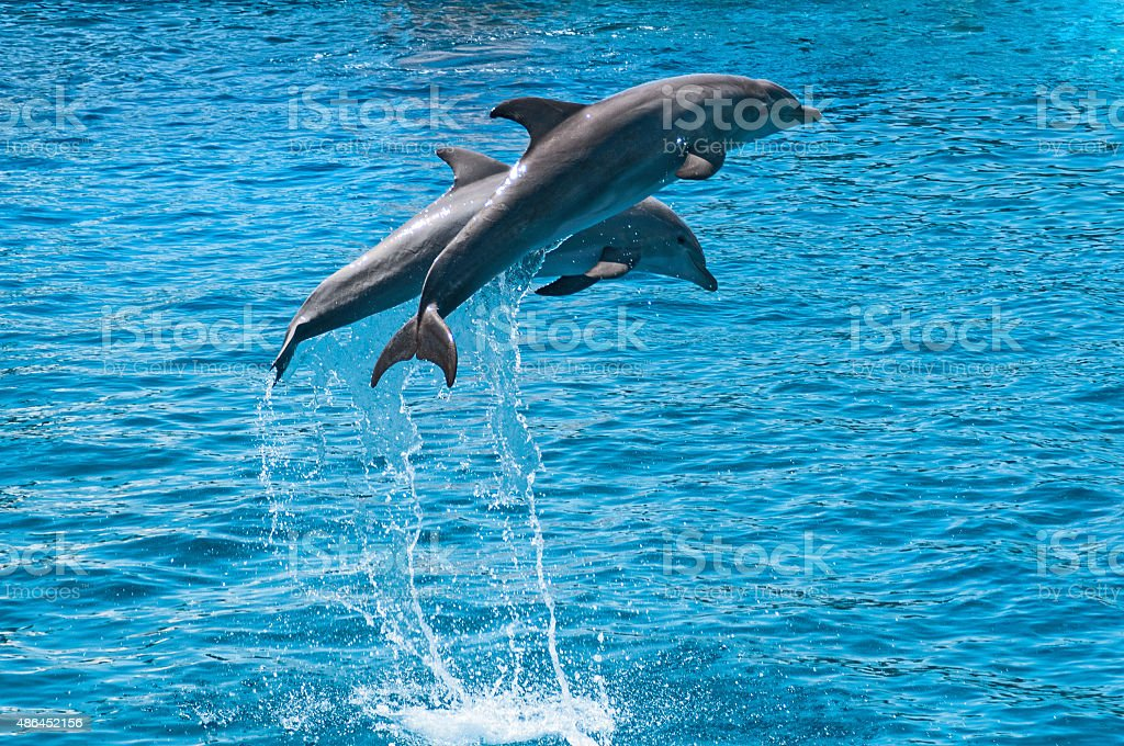 Two dolphins jump above blue water stock photo