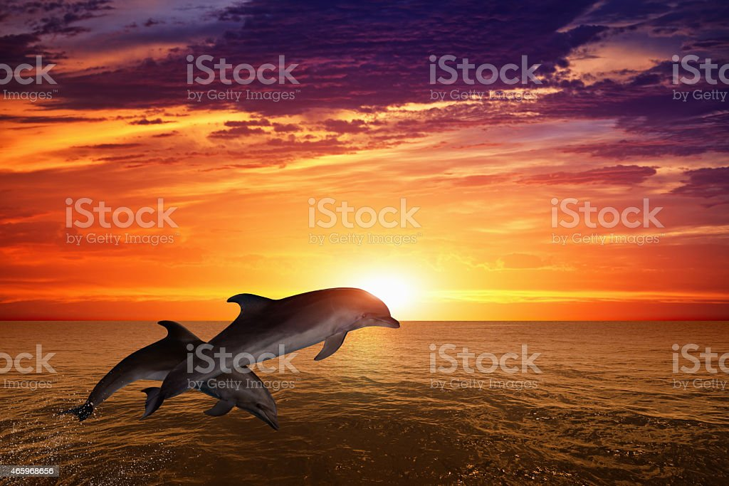 Two dolphins jumping in the sunset stock photo