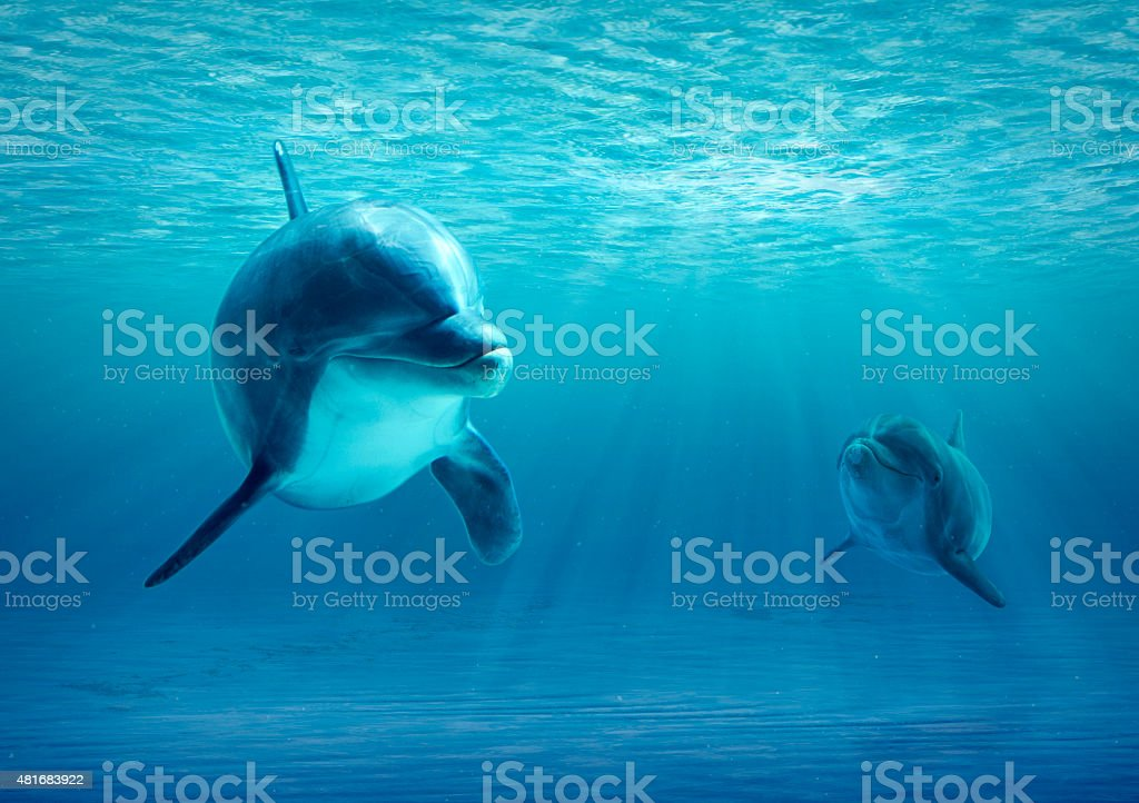Two Dolphins Under Water stock photo