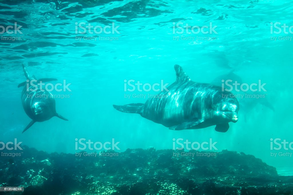 Two dolphins underwater stock photo