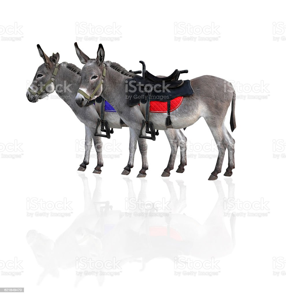 two donkeys stock photo
