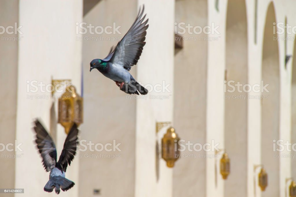 Two doves flying in front of a beautiful building stock photo