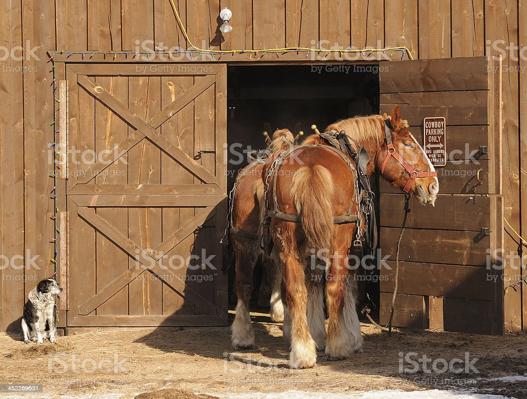 Two Draft Horse and a DOg stock photo
