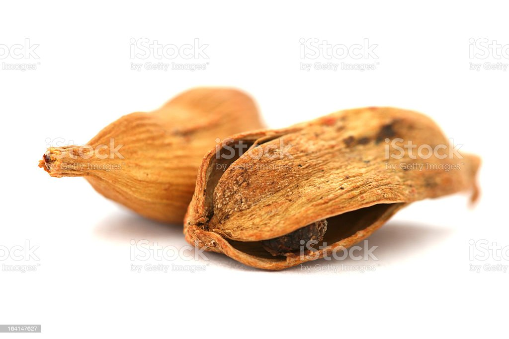 Two dry cardamom see pods on white background royalty-free stock photo