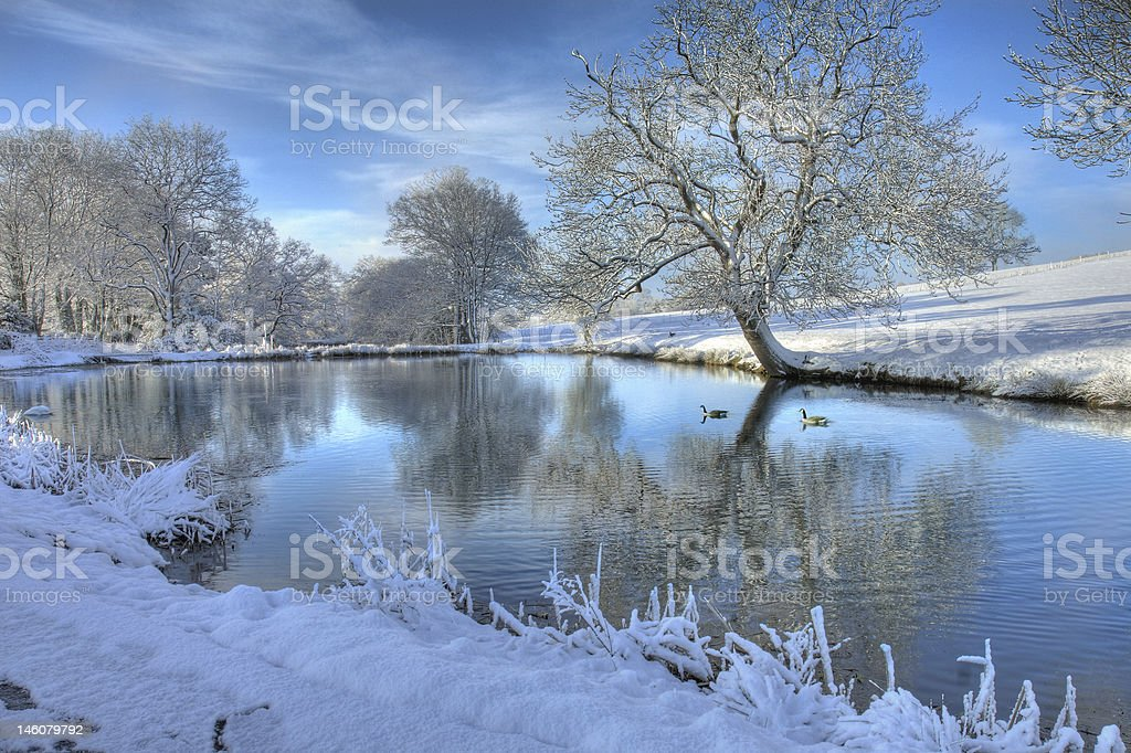 Two ducks swimming on a pond in the winter  royalty-free stock photo