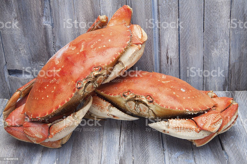 Two Dungeness crabs stock photo