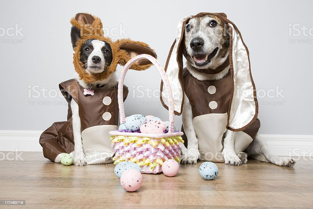 Two Easter Dogs royalty-free stock photo