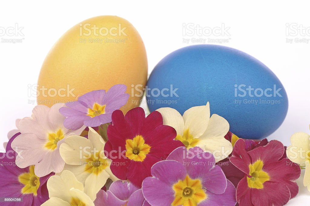 Two Easter Eggs with primroses royalty-free stock photo