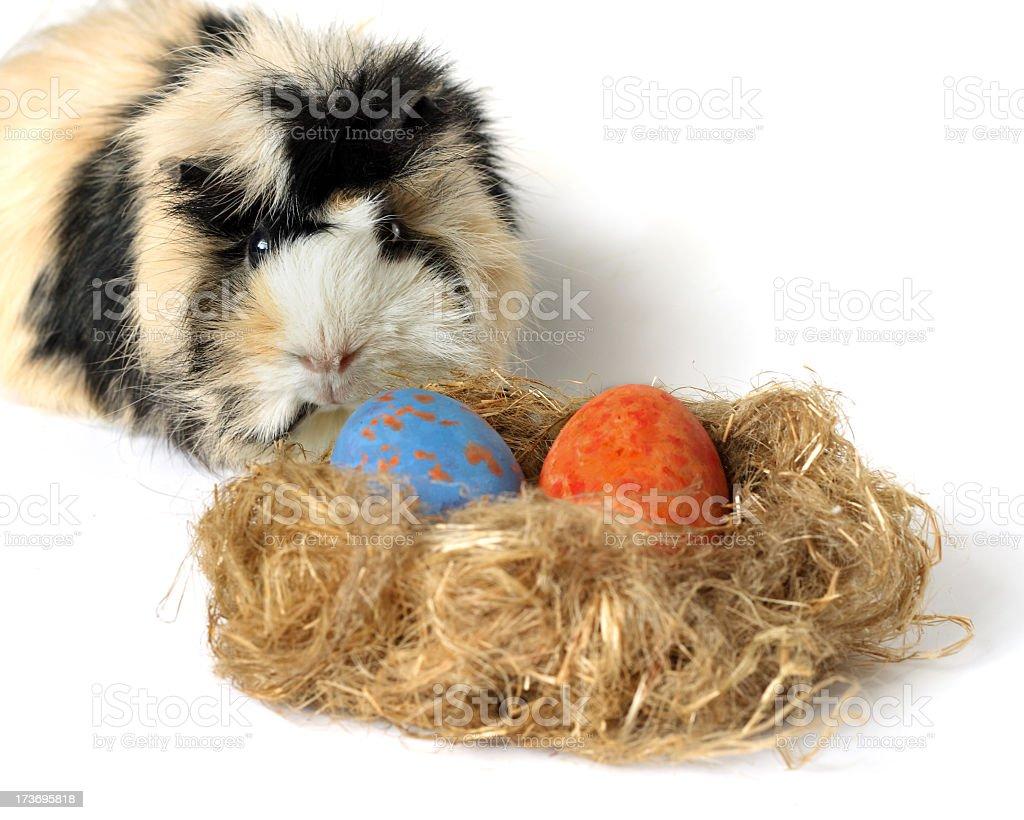 two eggs stock photo