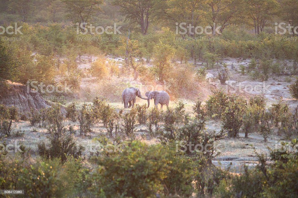 Two Elephants fighting in the dust stock photo