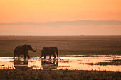 Two Elephants in the sunset