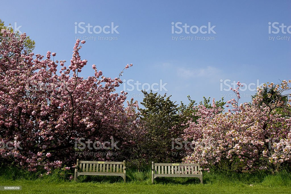 Two empty park benches royalty-free stock photo