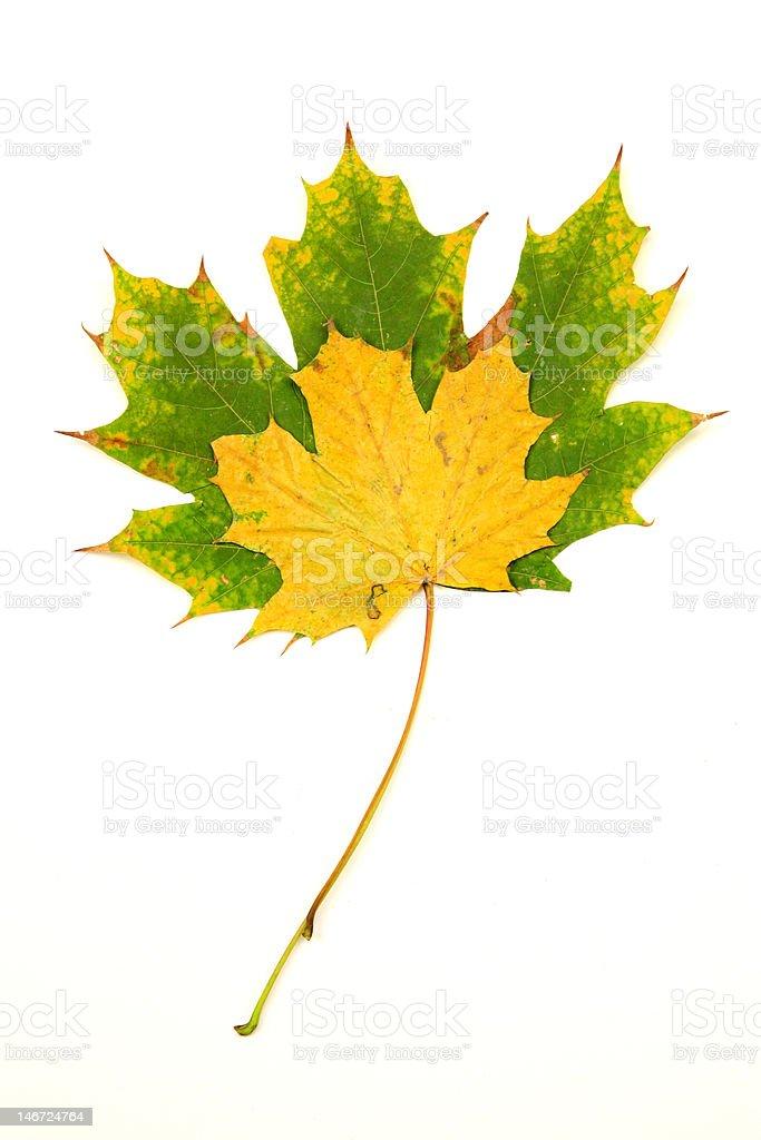 Zwei fallen Blätter Lizenzfreies stock-foto