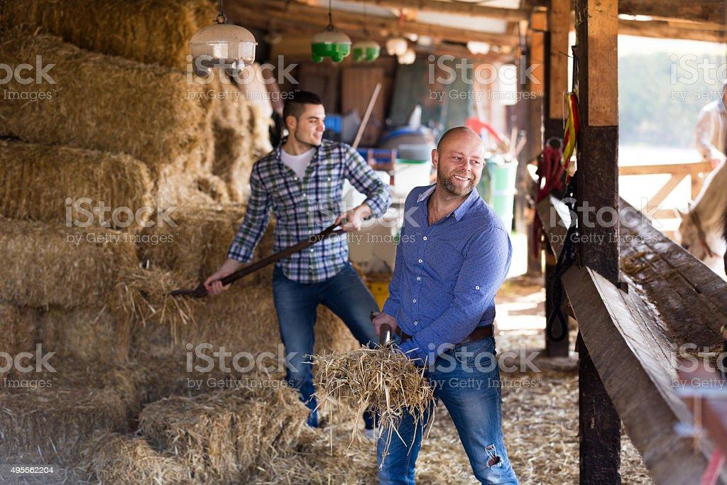 Two farm workers feeding horses stock photo