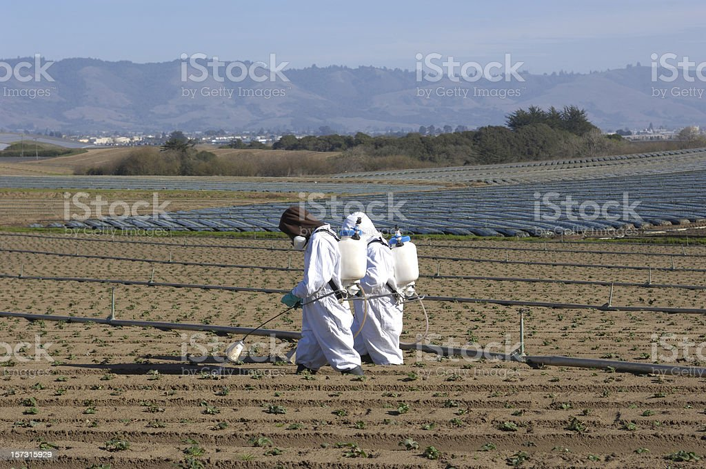 Two Farm Workers in Protective Clothing Spraying Plant Seedlings stock photo