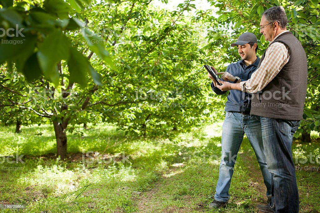 Two Farmer in Orchard royalty-free stock photo