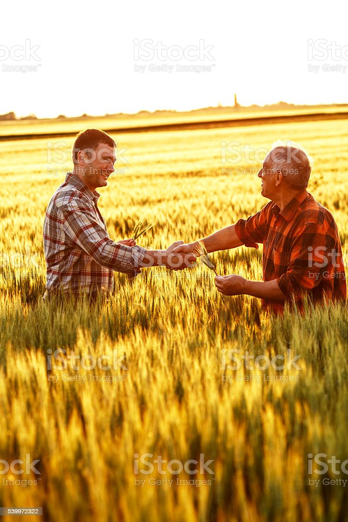 Two farmer standing in a wheat field stock photo