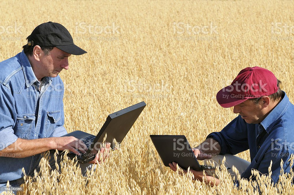 Two Farmers Planning PC in a Wheat Field royalty-free stock photo