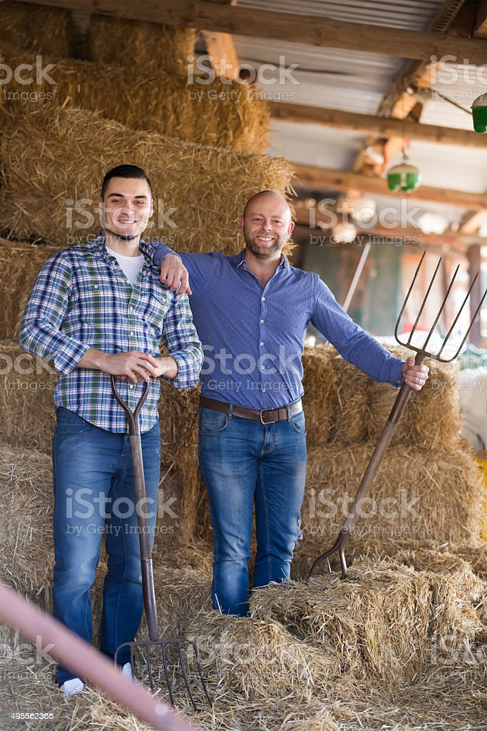 Two farmers working in barn stock photo
