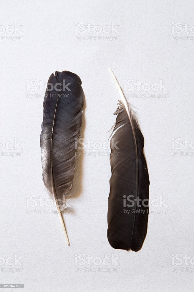 Two feathers stock photo