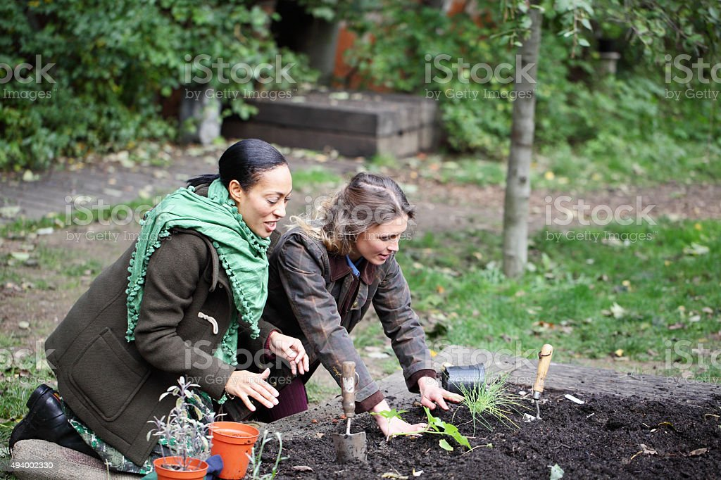 two female friends planting in the allotment stock photo