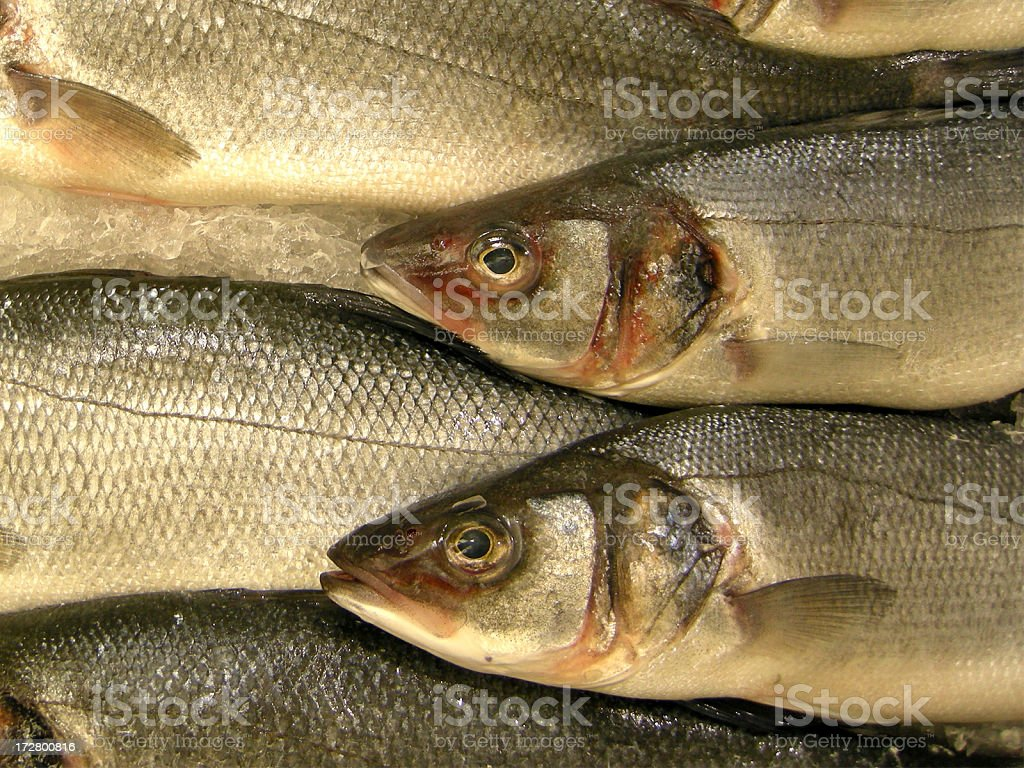 two fish stock photo