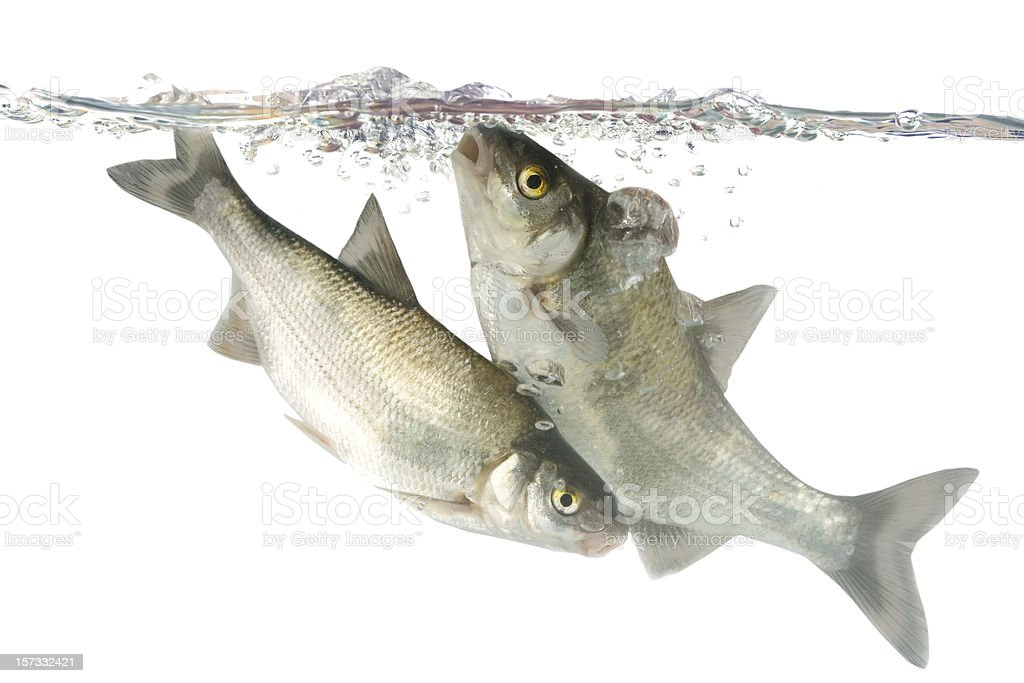 Two fishes stock photo