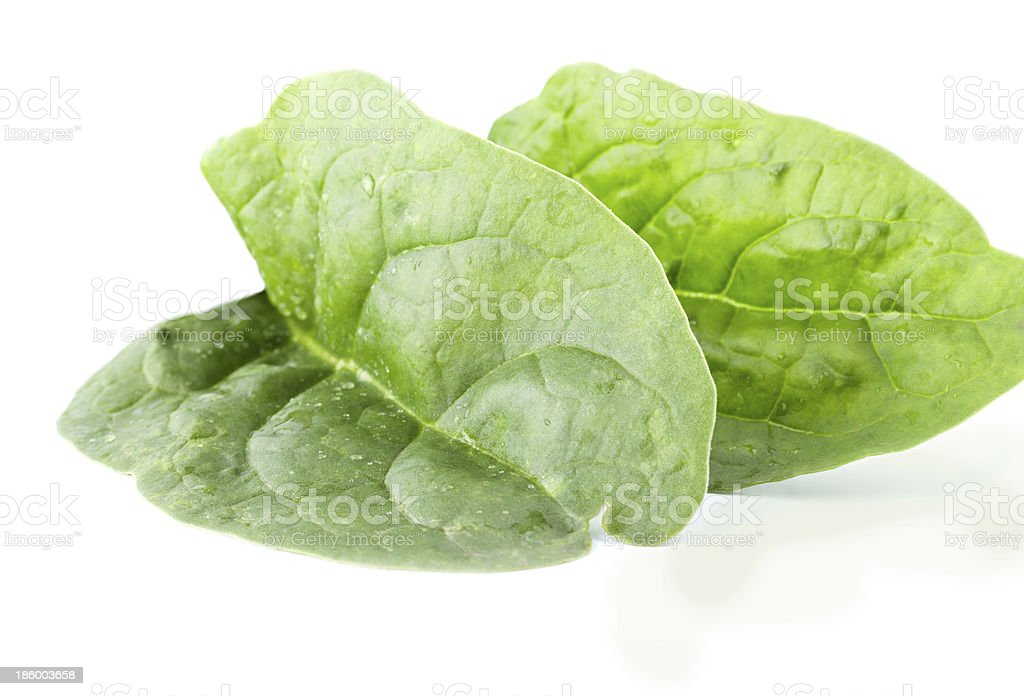 Two fleshy spinach leaves royalty-free stock photo