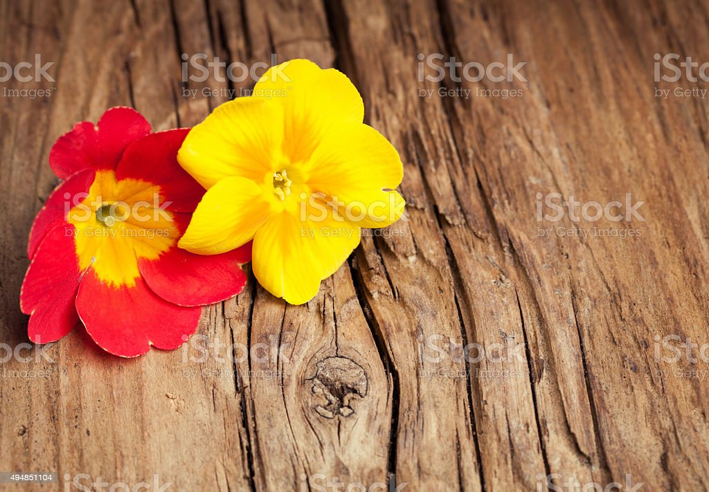 Two  flowers of primrose on retro wooden background stock photo