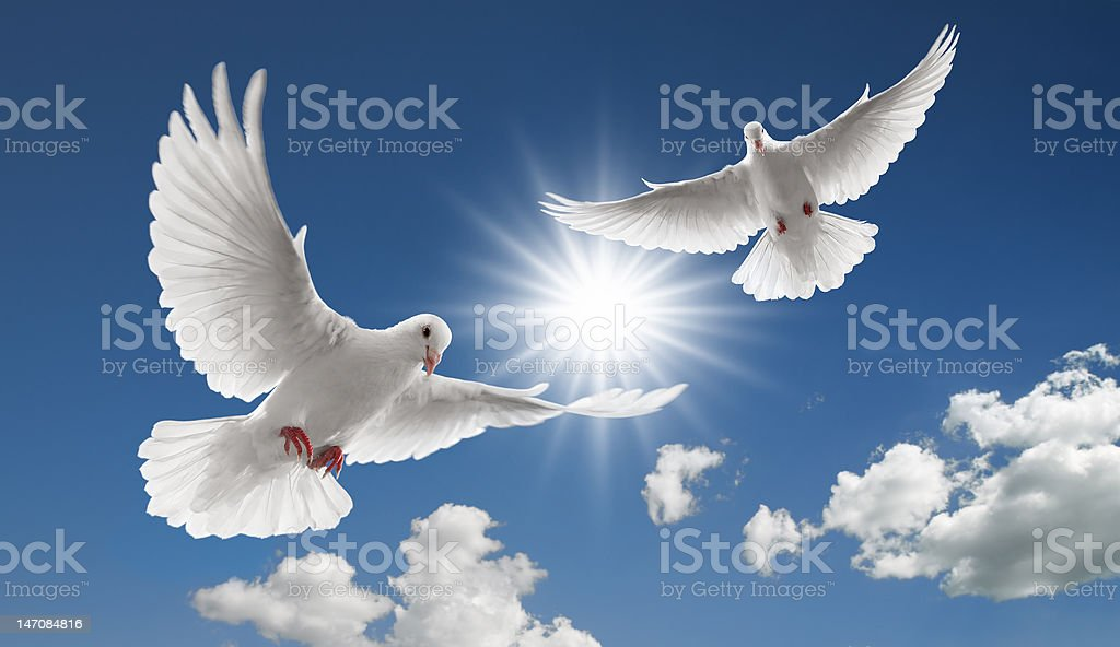 two flying doves stock photo