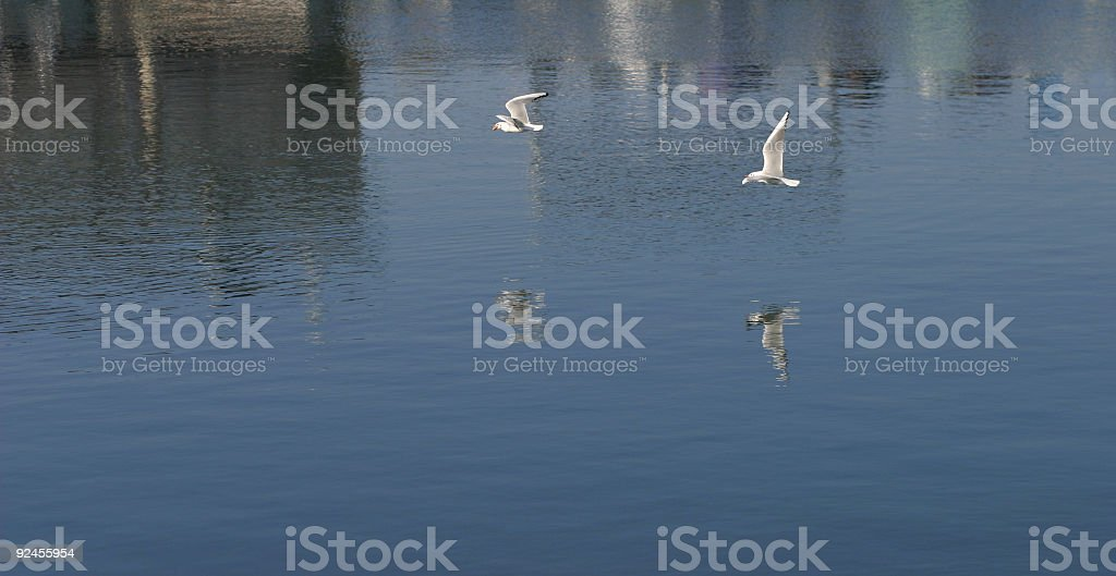 Two flying seagulls royalty-free stock photo