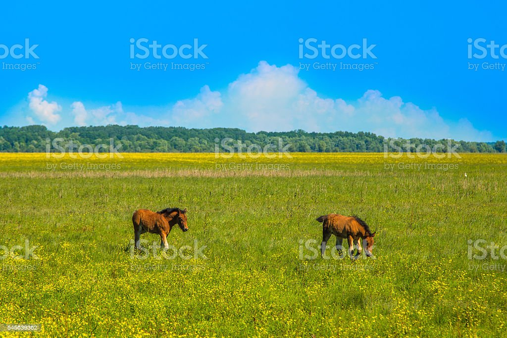 Two foals on green field in spring in nature stock photo