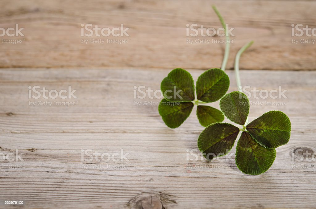 two four-leaves clovers for good luck stock photo