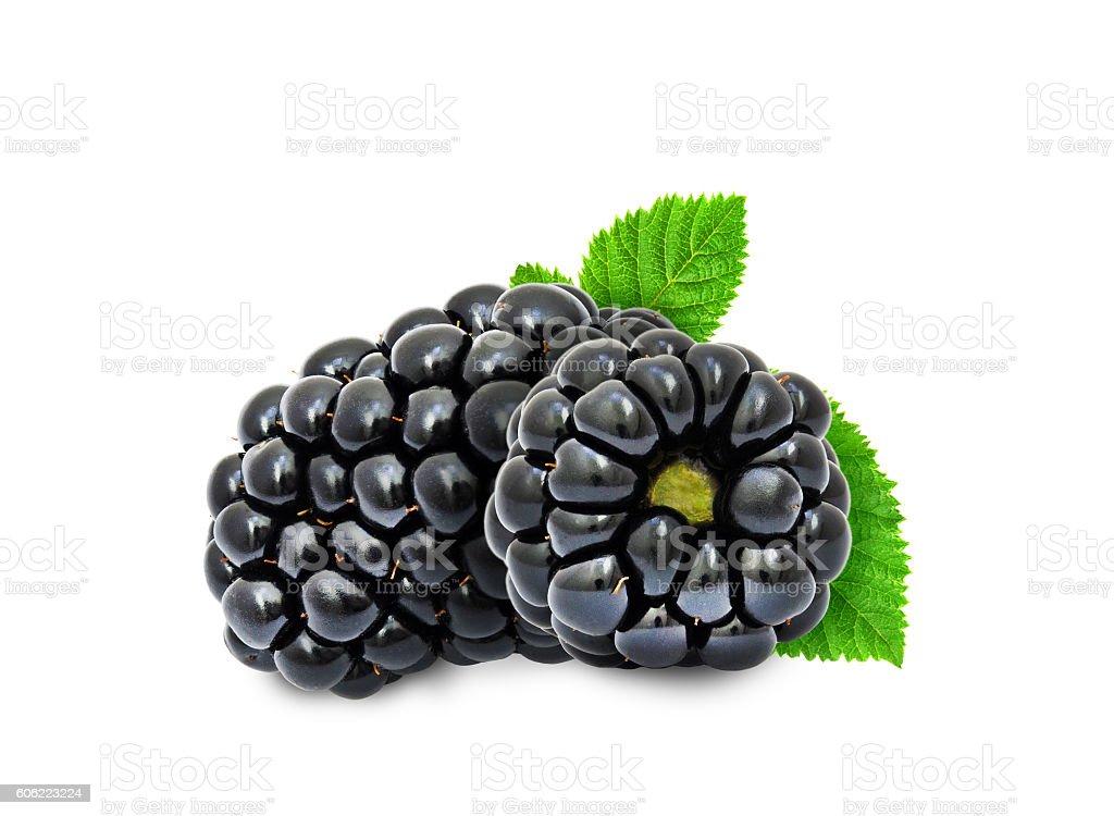 Two fresh blackberries. stock photo