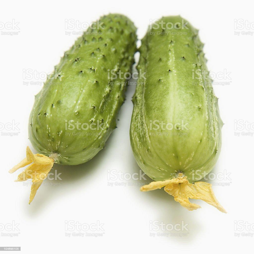 Two fresh cucumbers stock photo