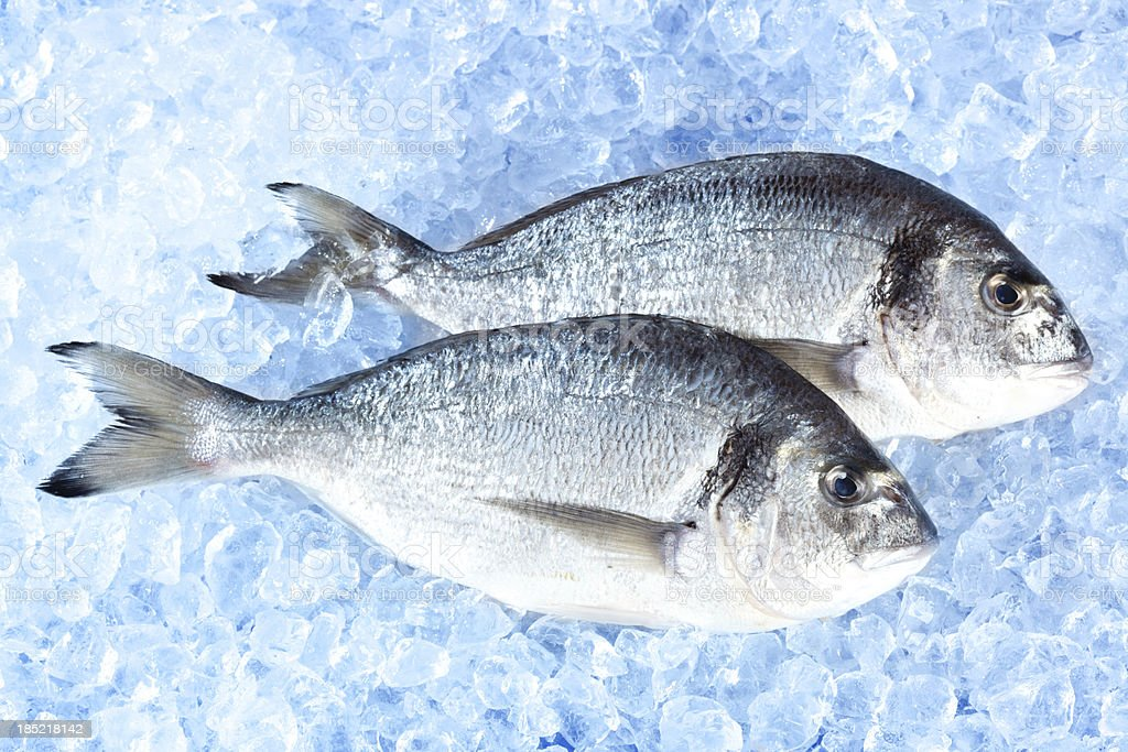 two fresh fish stock photo