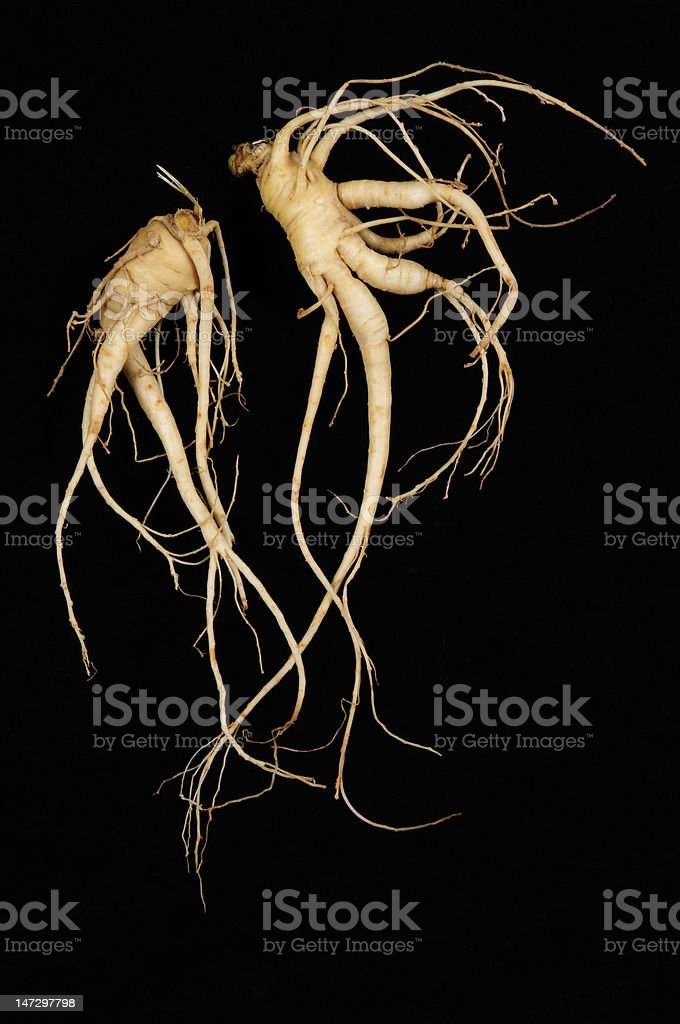 Two Fresh Ginseng, 'Man Roots' royalty-free stock photo