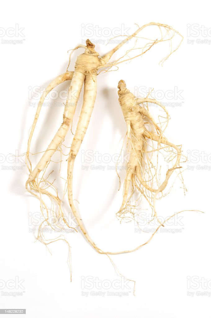 Two Fresh Ginseng Man Roots royalty-free stock photo