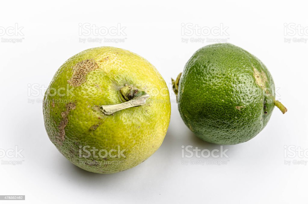 Two Fresh Greek Limes stock photo