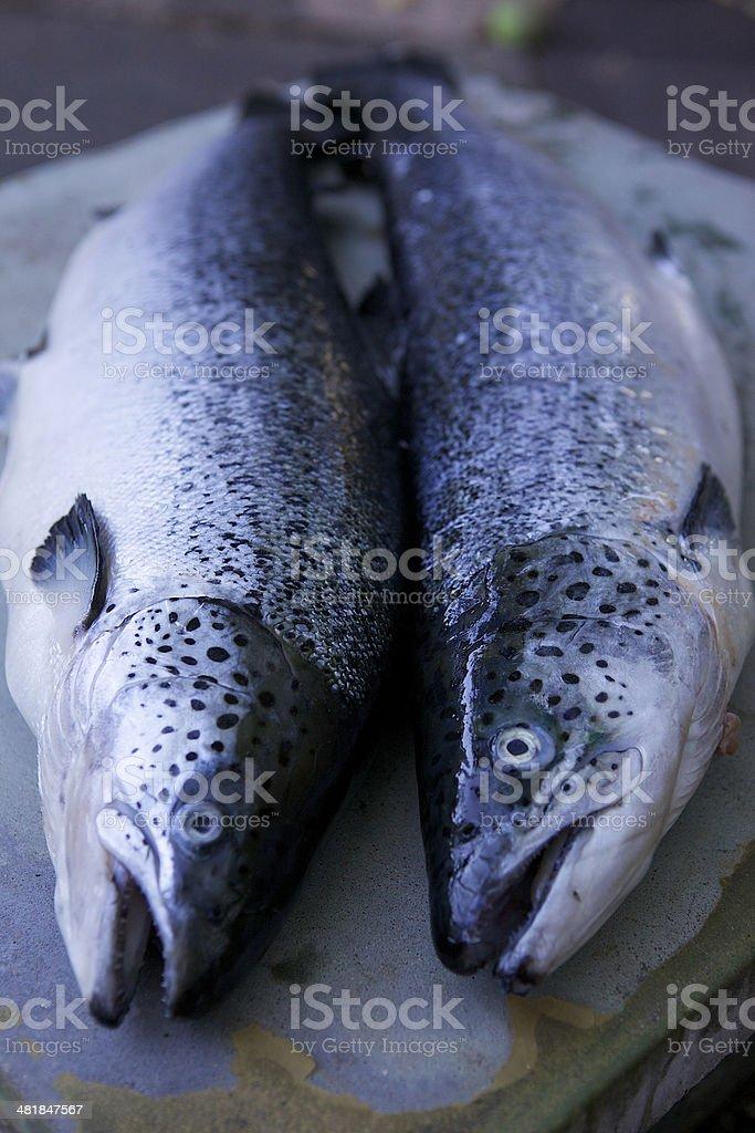 Two fresh salmon royalty-free stock photo