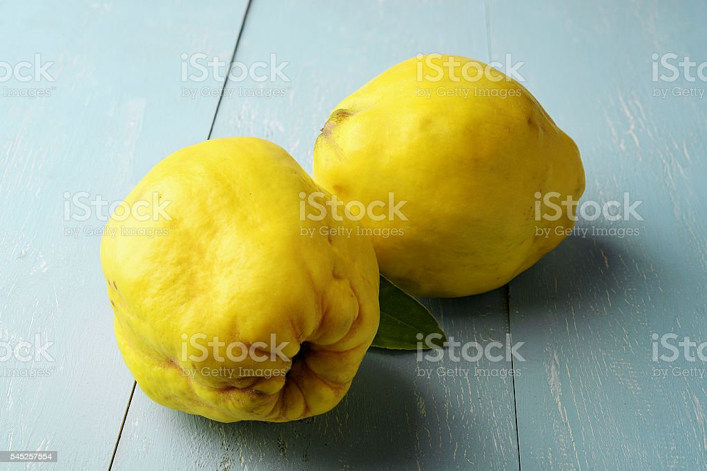 two fresh yellow quinces stock photo